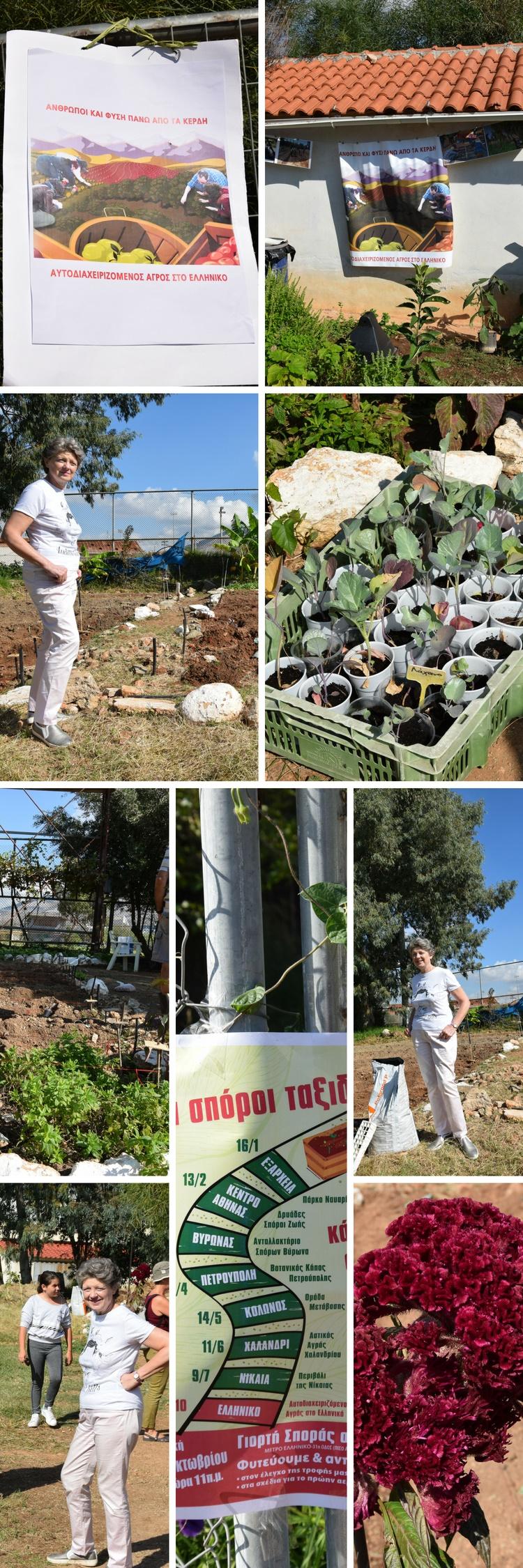 Η Ρίτα Χαριτάκη στον αυτοδιαχειριζόμενο αγρό του Ελληνικού - Φωτογραφίες στην Εναλλακτική Δράση